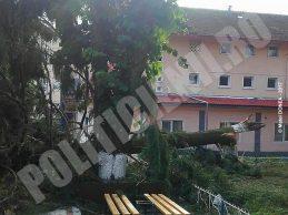 Liceul Banatean - Otelu Rosu