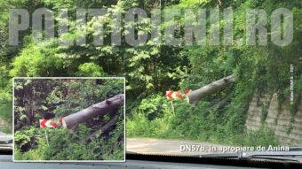 Arbori taiati de hotii de lemne si ajunsi pe DN57b, langa Anina